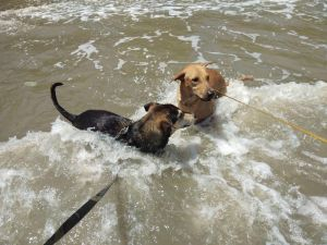 Playtime at the beach