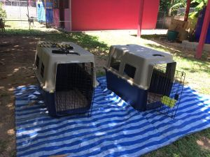 Going to their forever homes abroad