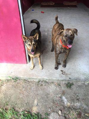 Mango & Samui