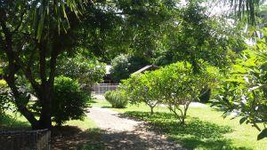Ila's World Dog Hotel - Garden